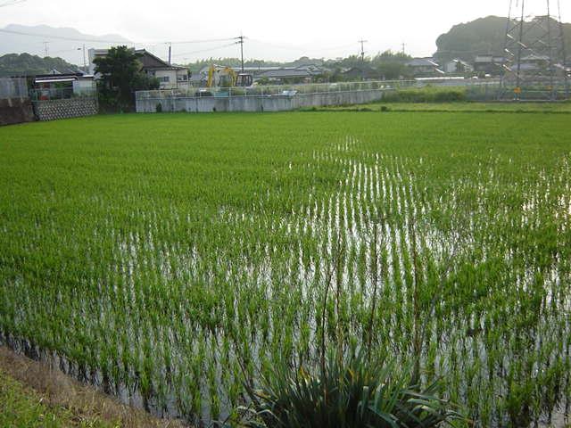 Plantacion2